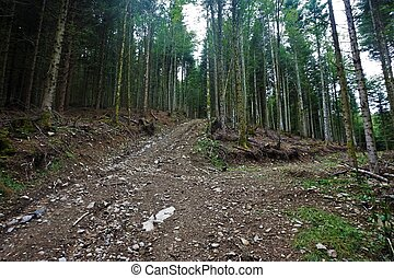 Dirt road through the forest in the Vosges near Markstein mountain