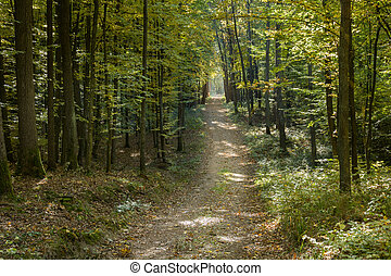 Dirt road through the forest on a sunny October day