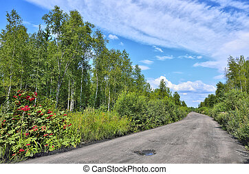 Dirt road through the forest - summer landscape