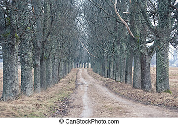 Dirt road through the gloomy forest of oaks
