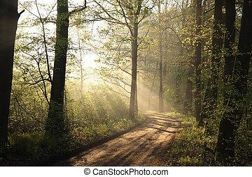 Dirt road through the oak forest