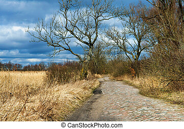 dirt road through the woods covered with cobblestones the sky is blue beautiful