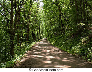 Dirt road through the woods