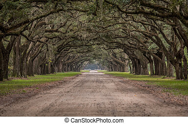 Dirt Road Through Tunnel of Live Oak Trees