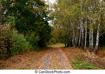 dirt road to the autumn forest