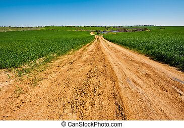 Dirt Road to the Lake among the Green Fields, Israel Spring
