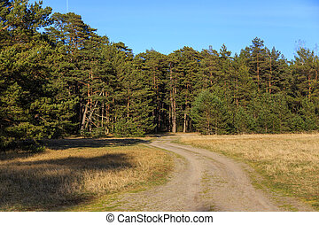 Dirt road to the pine forest