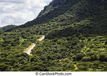 Dirt Road Tropical Valley - Dirt road winding up thick bush...