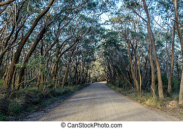 Dirt Road under the Tree