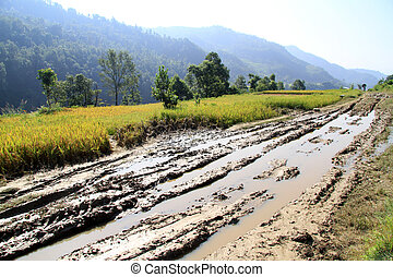 Dirt road - Wet dirt road and rice field in Nepal