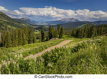 Dirt road winding through the Colorado Mountains in the Summertime