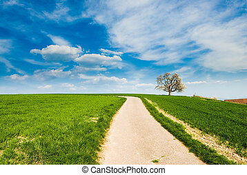 dirt road with tree - single blossoming cherry tree in...