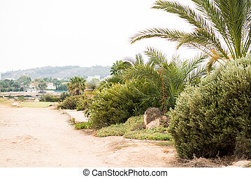 Dirt Road with Tropical Plants on Side of Road.
