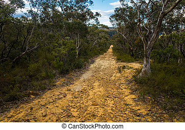 Dirt Track Leading Through a Forest of Eucalyptus trees
