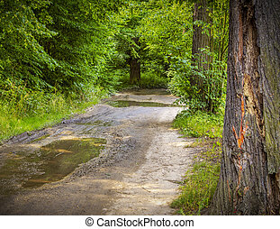 Dirt track, or road with the water puddles is in the spring forest