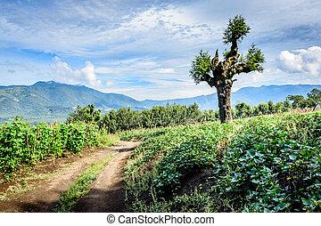 Dirt track winds through farmland in Guatemalan highlands