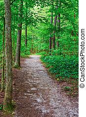 Dirt Trail Through Trees