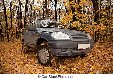 Dirty black car on glade in autumnal forest