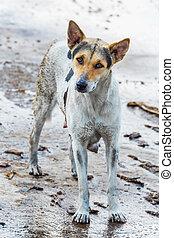 Dirty dog  - Dirty female dog on wet concrete floor