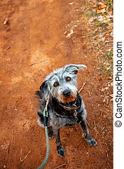 Dirty Dog Hiking on Red Rock Path