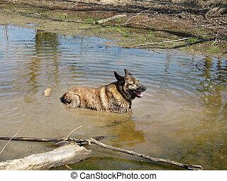 Dirty dog, muddy dog, wet dog, happy dog