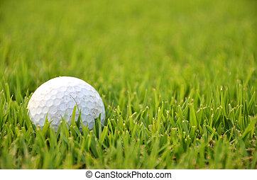 Dirty golf ball on the grass
