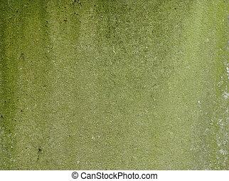 dirty green mossy worn wall