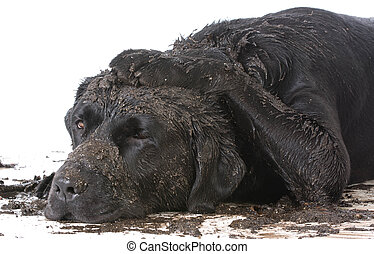 dirty muddy dog on white background