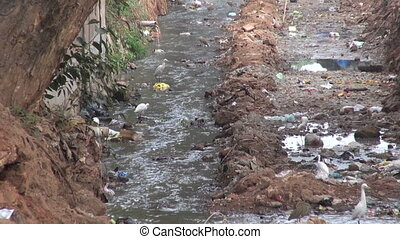 dirty open sewer canal in India - dirty open sewer canal in...