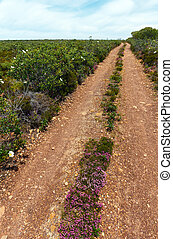 Dirty road and big white azalea wild flowers on the sides - ...