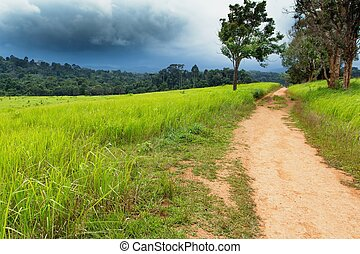 Dirty road in Tropical meadow