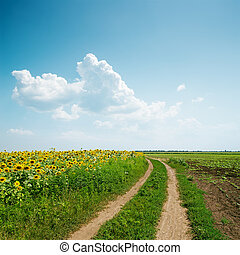 dirty road to horizon in agriculture fields and clouds over it