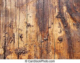 Dirty Wooden Texture