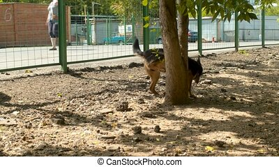 Disabled dog running near the fence - Disabled dog running...