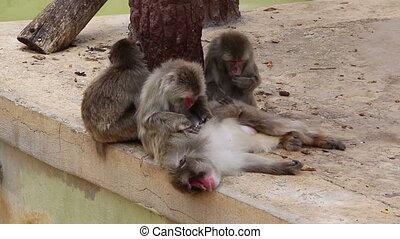 disambiguation, singes, autre, chaque, soins personnels, ou