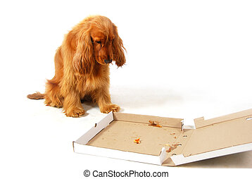 Disappointed puppy staring into an empty pizza box