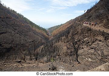disaster., 破壊された, 巨大, 持ちなさい, これ, いくつか, 森林, 木, 意志, terribly, 火, マデイラ, survived, 相続財産, 世界, 2016., 生活