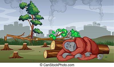 disboscamento, gorilla, scena, moribondo