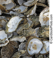 Discarded oyster shells - Close-up of discarded oyster ...