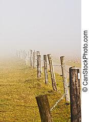 discendere, nebbia, in, autunno