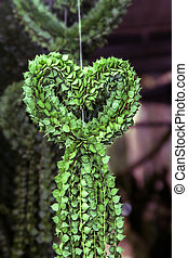 Million Hearts tree - Dischidiasp or Million Hearts tree...