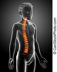disco, anatomía, espinazo, intervertebral