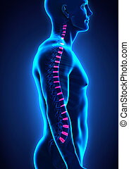 disco, intervertebral, espinazo