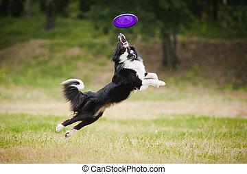 disco volador, perro