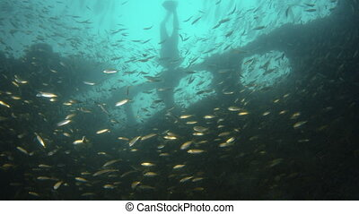 Discovering a sunken ship - A moving shot underwater. A...