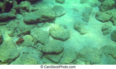 Small fish dart around as the camera approaches a foreign object on the tropical ocean floor, from a diver's perspective. Video FullHD