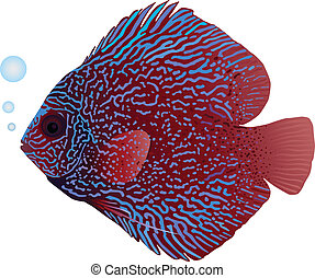 Discus Fish - A detailed illustration of a snakeskin discus...
