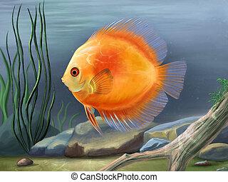 Discus fish illustration
