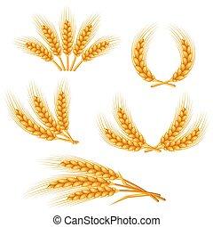 diseñe elementos, trigo