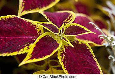 diseño decorativo, con, coloreado, hojas